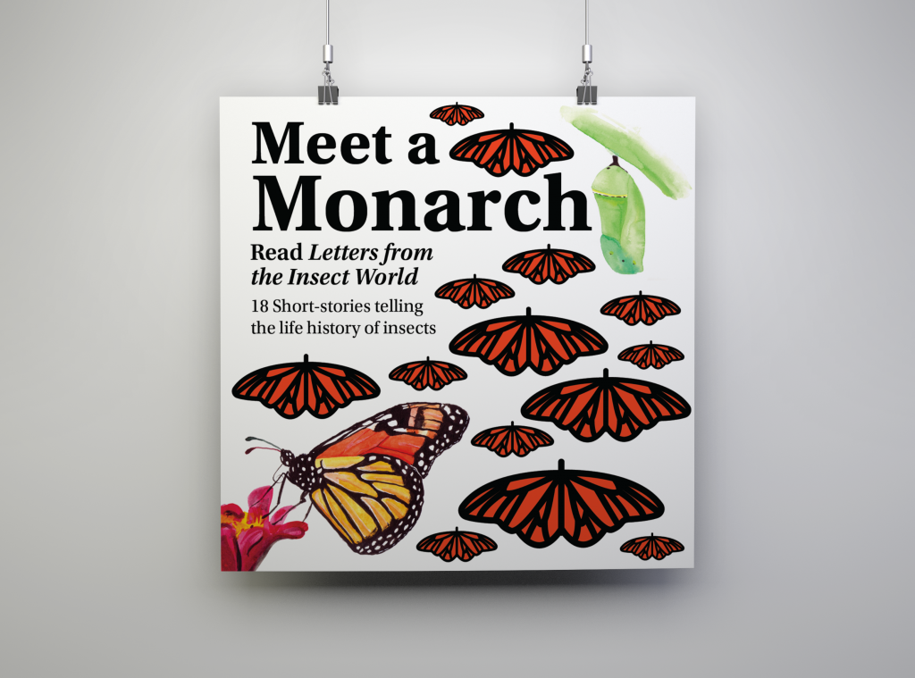 advertising poster two. Meet a monarch. Read letters of the insect world. 18 short-stories telling the life history of insects. Painting of a monarch butterfly and chrysalis. Monarch graphics.